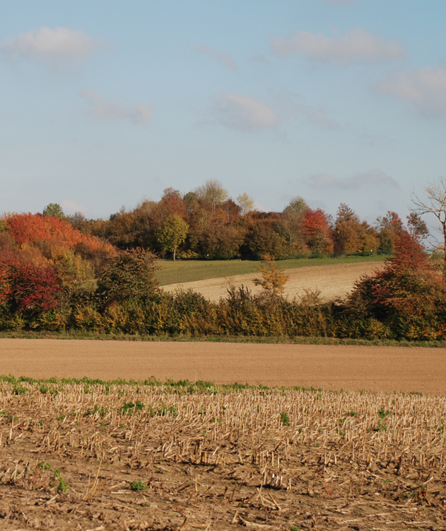 Butte_de_Warlencourt_Autumn